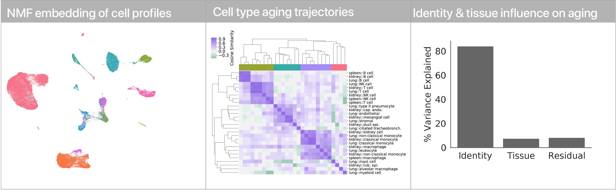 Aging trajectories